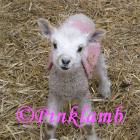 Pink Lamb_logo